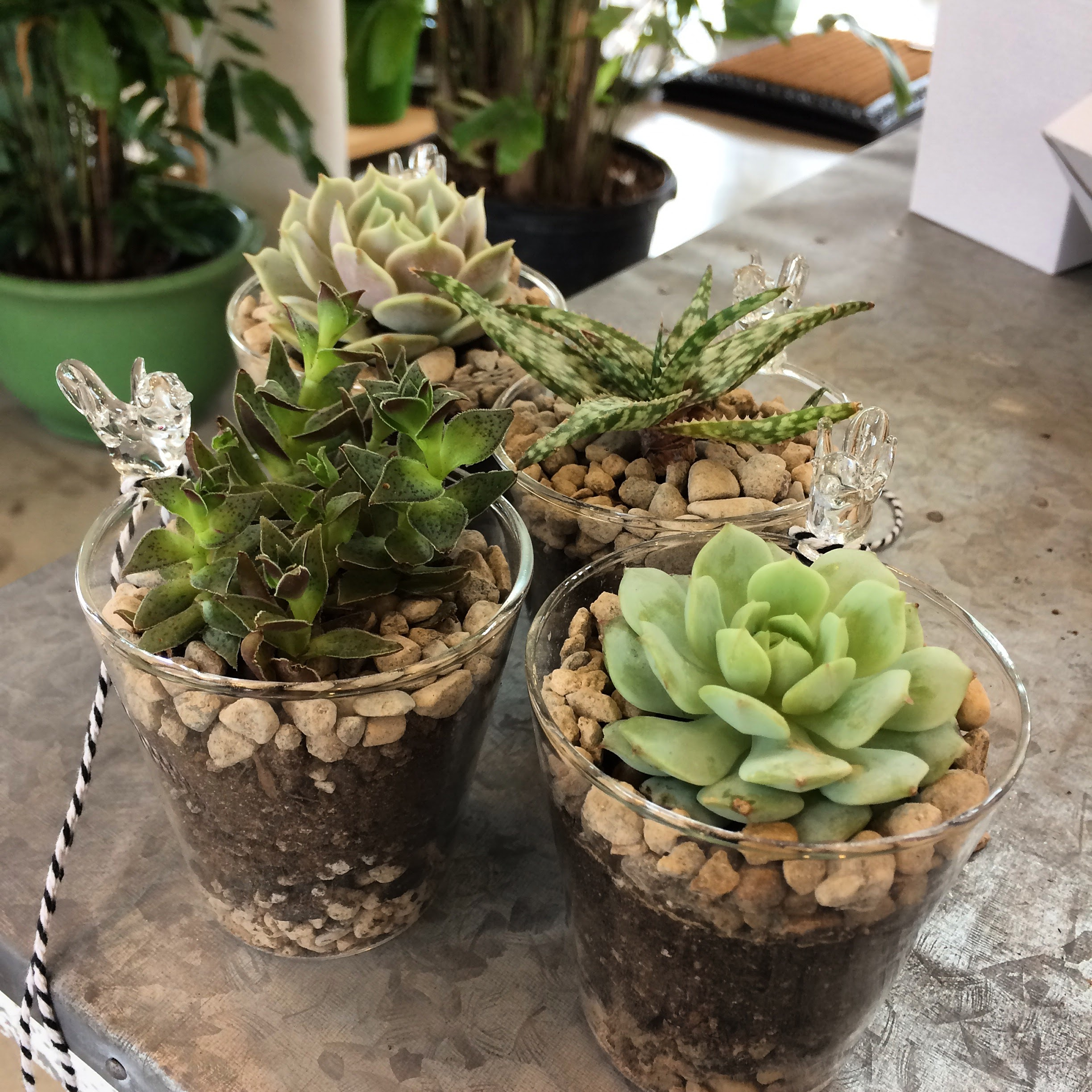 Cactus & Succulent Custom Design | 36 Street Garden Center & Bistro