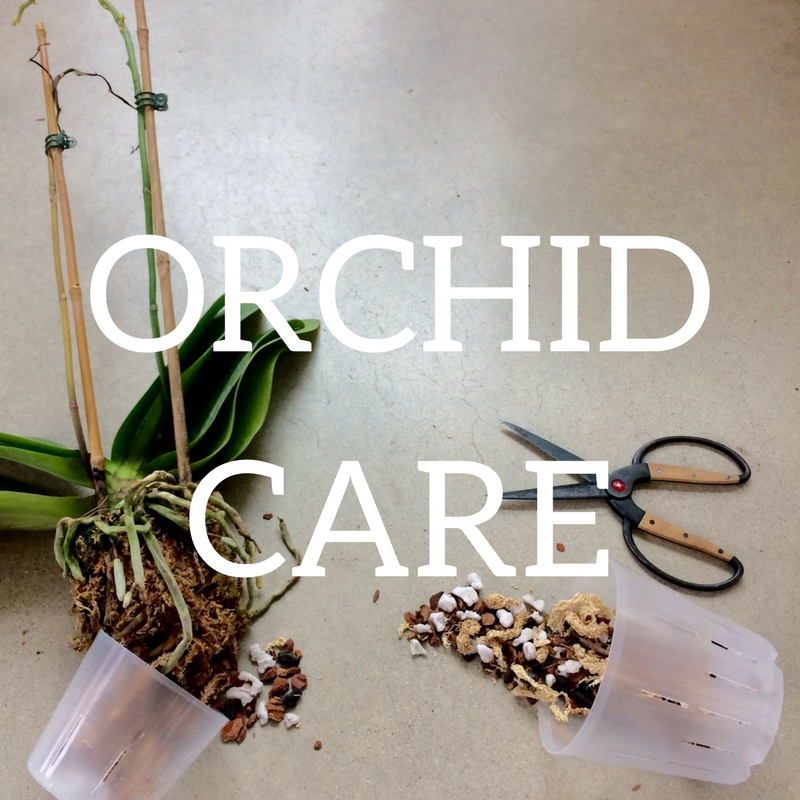 Click here for orchid care information!